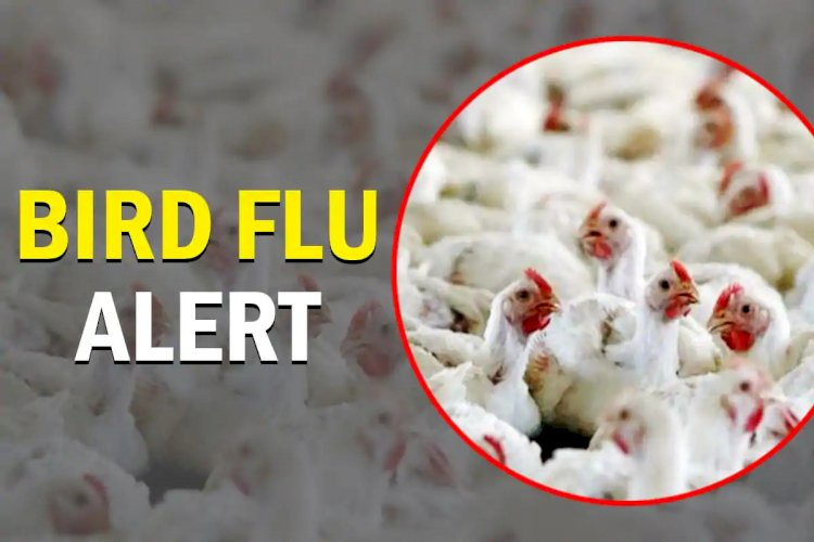 'Consumption of well cooked chicken, eggs safe,' says govt amid fears of bird flu
