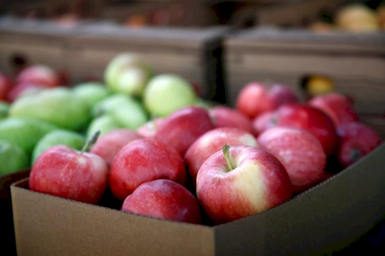 Apple That You are Eating Carries 100 Million Bacteria, Says Study