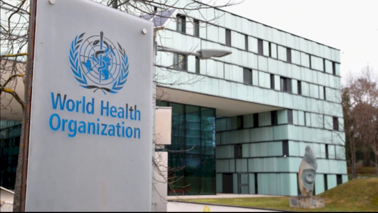 No evidence of BCG protection against coronavirus: WHO